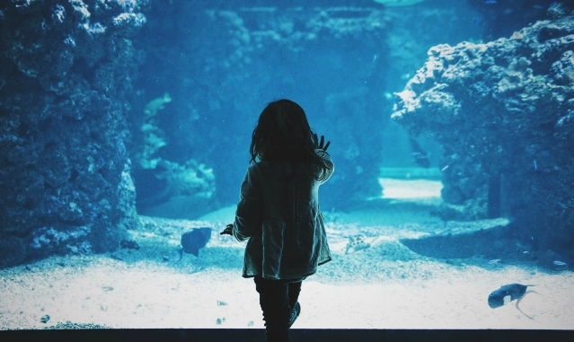 Explore Underwater Worlds with the Ripley's Aquarium Package