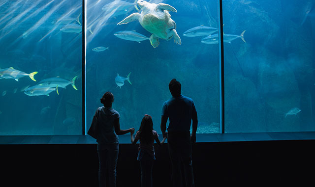 Jump Into Some Fun at Ripley's Aquarium of the Smokies