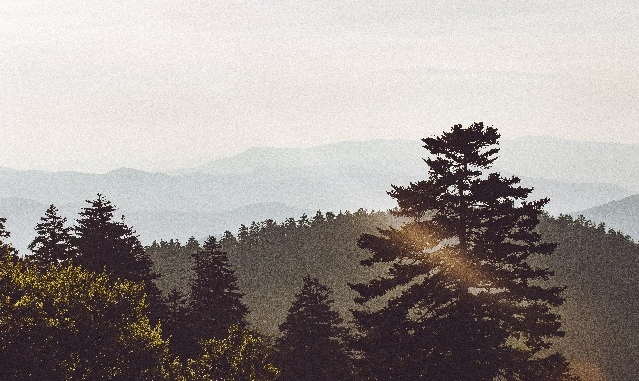 World Photography Day: The Best Photo Locations in the Smoky Mountains